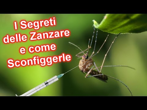10 cose che non sai sulle zanzare e come allontanarle