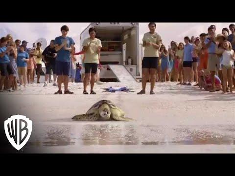 Dolphin Tale 2 | Mavis Returns To The Ocean | Warner Bros. Entertainment
