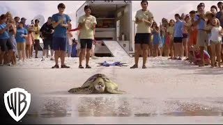 Nonton Dolphin Tale 2   Shoo Rufus Available Now Film Subtitle Indonesia Streaming Movie Download