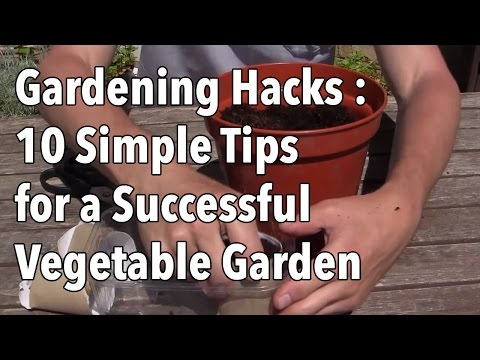 Garden tips - Growing your own food successfully is a constant process of learning which techniques work best for you and your plants. Often simple bits of advice from oth...
