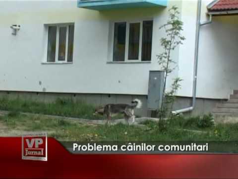 Problema câinilor comunitari