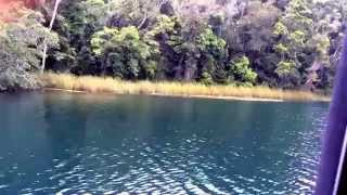 Barrine Australia  city pictures gallery : Lake Barrine Tour, Rain Forest, QLD, AUS