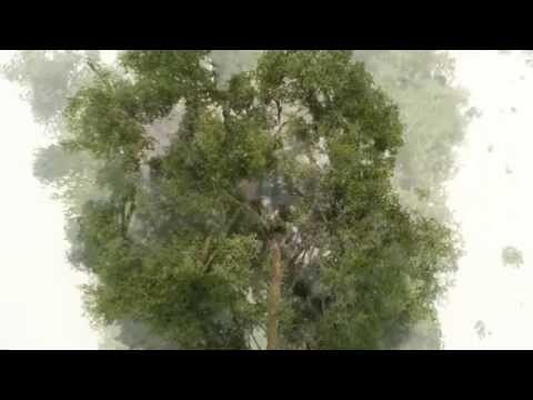 how to make realistic model trees – bäume selber bauen