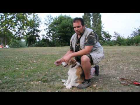 Kutya Duma – IV. rész (Nyakörv és póráz)