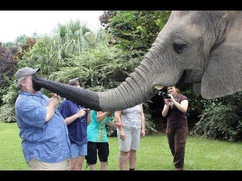 CUte Elephant  - Funny Elephants Trolling Human Compilation