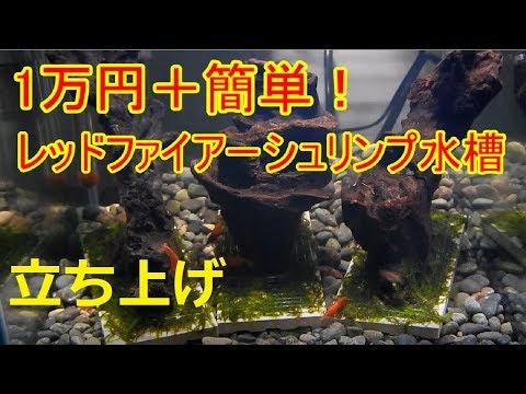 総額1万円の簡単レッドファイアーシュリンプ水槽立ち上げ【アクアリウム】