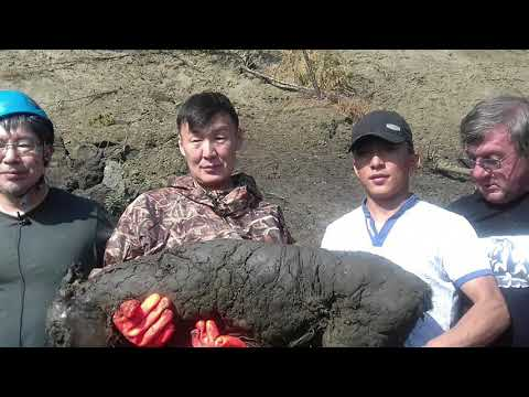Video - Βρέθηκε στη Σιβηρία το αρχαιότερο υγρό αίμα (φωτογραφίες)