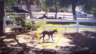 5 Chupacabras Caught On Camera & Spotted In Real Life!