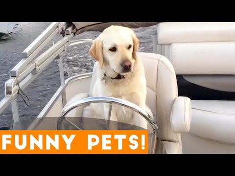 Funny animals - Funniest Pets & Animals of the Week Compilation August 2018  Funny Pet Videos