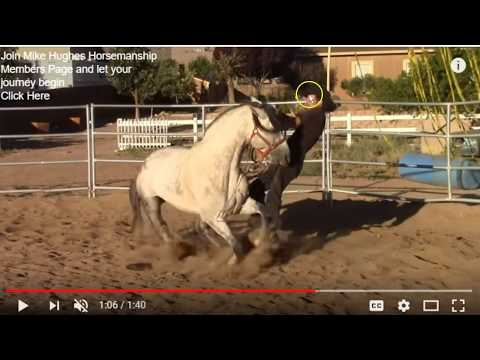 Horse Training Is Something You Want To Pay Attention Too - Stallion Who Gets Too Much Pressure