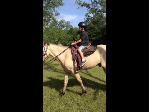 Horses of Pensacola at Miracle Camp