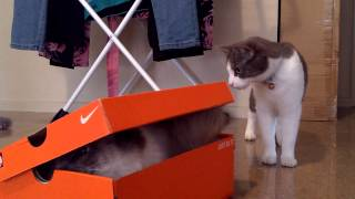 9. Symba and the Nike Box..