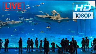 """World's biggest Aquarium"" 🐠🌎 (2017) #Live Shows  