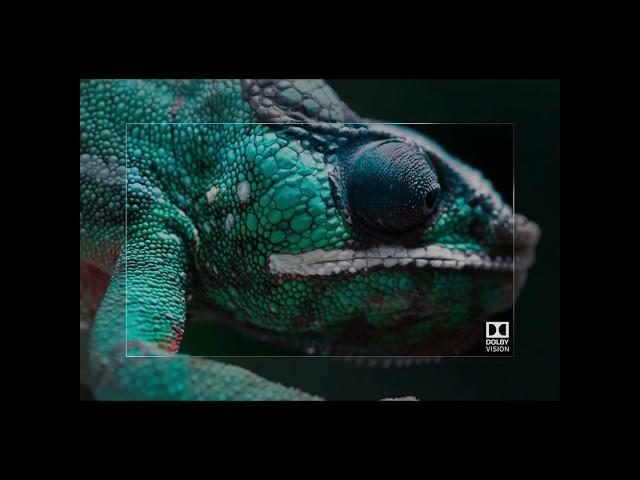LG OLED TV – DOLBY VISION