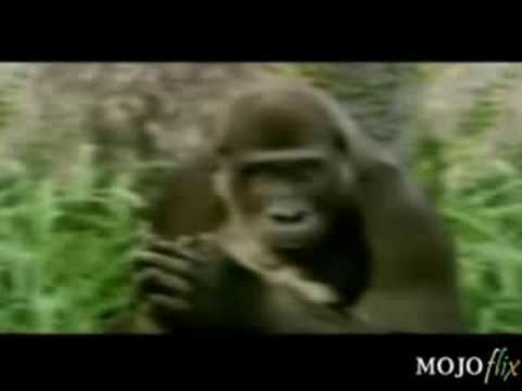 Bud Light Commercial - Beer Monkey's