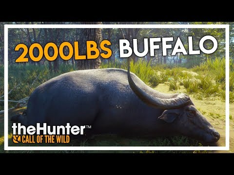 Hunting A 2000lbs Water Buffalo In Thehunter Call Of The Wild (parque Fernando Dlc Gameplay #1)