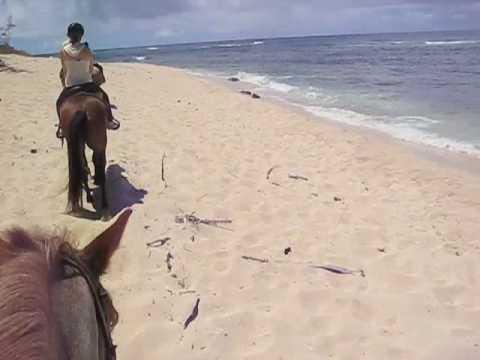 Horseback Riding at North Shore, Oahu