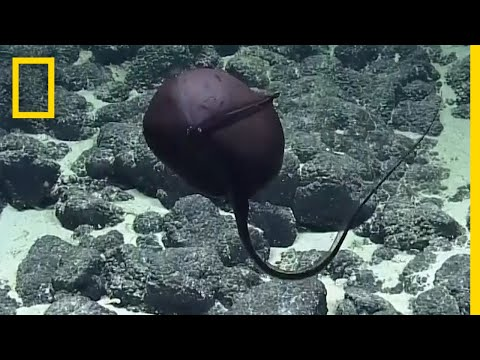 Scientists' Hilarious Reaction to Bizarre Deep-Sea Fish  National Geographic