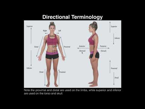 A&p I Lab | Exercise 1: Anatomical Position, Directional Terms, & Body Planes