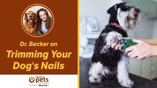 Trimming Your Dog's Nails