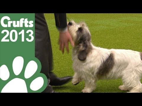 0 Crufts 2013 Best in Show Winner
