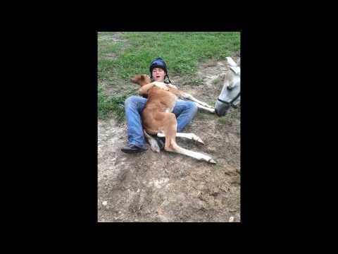 ragazza si avvicina al cucciolo di cavallo: la reazione è sorprendente!