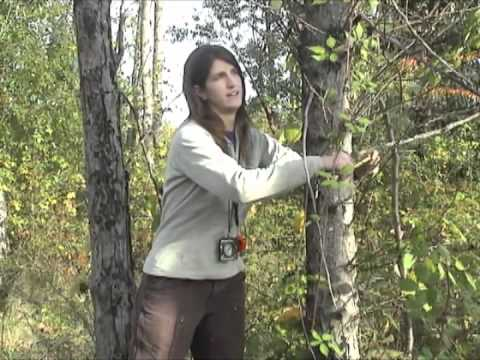 Forest Monitoring 9  - Tree Density, Species, Health, DBH and Height