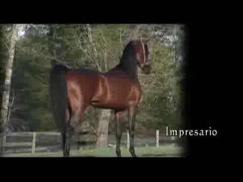 Aria Impresario - 2009 US National Champion Jr. Stallion