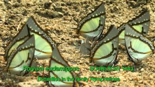 Butterflies From Chiang Mai 2012