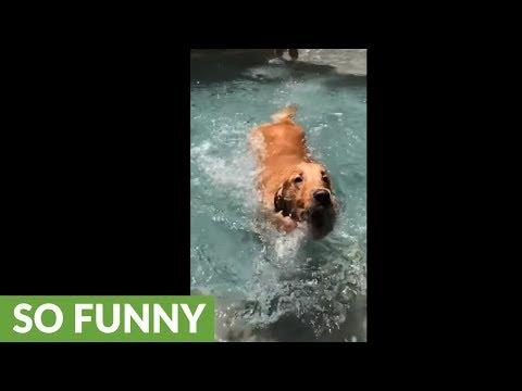 il-cane-che-impara-a-nuotare-in-slow-motion