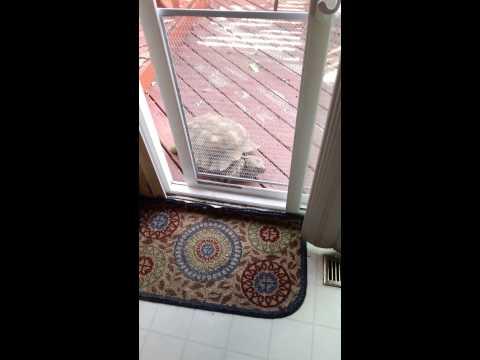 這隻站在門外面的陸龜只需5秒鐘就能讓你大吃一驚,1分鐘後你會不相信自己剛剛看到的畫面!