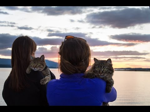 Video: Adventure cats Bolt and Keel go sailing