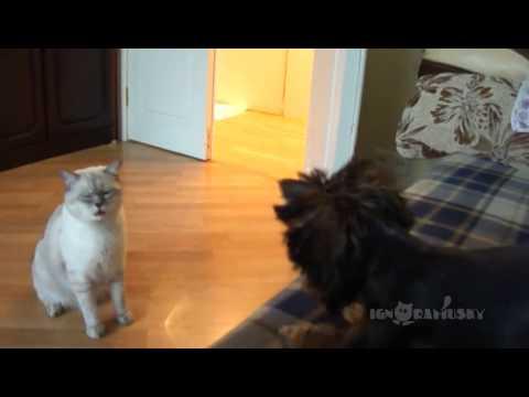 il cane tenta di stringere amicizia: la reazione del gatto!