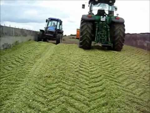 Koszenie kukurydzy 2011