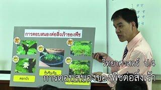 วิทยาศาสตร์ ป.4 การตอบสนองของพืชต่อสิ่งเร้า ครูเฉลิมชัย วัดเข้าหลาม
