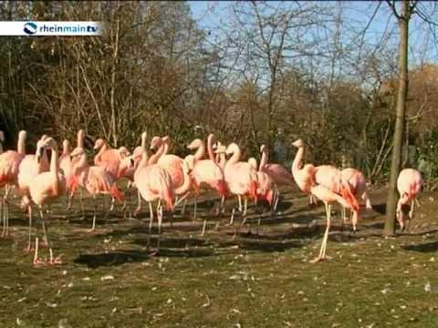 Zoo Frankfurt: Kältehoch Cooper lässt Tiere im Frankfurter Zoo frieren