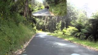 Moe Australia  city photo : Great driving roads - Mt Baw Baw to Moe VICTORIA Australia