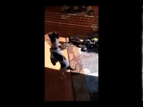 Funny Animals – Kanguroo Dog