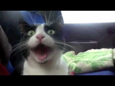 25 Funny Cat Videos Compilation