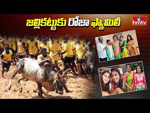 జల్లికట్టు కు రోజా ఫ్యామిలీ | MLA Roja Participated in Jallikattu Celebration in Chittoor