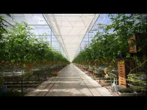Ontario greenhouse vegetables backed by federal grants