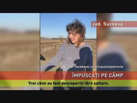 Câini găsiți împușcat, pe un câmp din județul Suceava