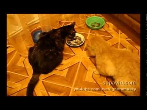 due gatti e una sola ciotola...