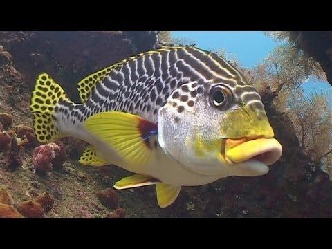 Diving in Bali (720p)