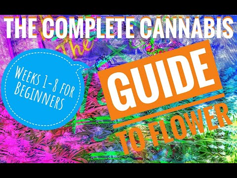 The Complete Cannabis Guide to Flower For Beginners with LEDs. Weeks 1-8