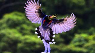 Video Beautiful Birds 1 MP3, 3GP, MP4, WEBM, AVI, FLV Agustus 2019