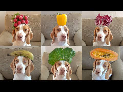 100 Fruits  Vegetables on Dog s Head in 100