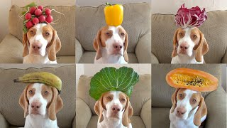 100 Fruits & Vegetables on Dog's Head in 100 Seconds: Cute Dog Maymo - YouTube