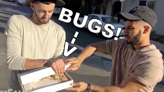 50,000 THUMBS UP IN 1 DAY and I'll eat a live insect by your choice!! Just making it interesting!! :) SUBSCRIBE TO VLOG CHANNEL: https://www.youtube.com/user/ASAvlogsSLIMS CHANNEL: https://www.youtube.com/user/SlimMoficationHappy Birthday Slim! Best friends don't give gifts normally, we make memories! Hahaha :)Twitter: @omgAdamSalehFacebook: Adam SalehInstagram: @adamsalehSnapchat: adamsaleh93SUBSCRIBE for Daily Videos :) Thank you AdoomyGang !! xhttp://www.youtube.com/user/ASAVlogsMain Channel: http://www.youtube.com/TrueStoryASAAdam Saleh EVENT BOOKING:To book Adam Saleh to perform at your event or to tell us about an event in your area that you would like to see him perform at please email: info@AdamSalehworldwide.com