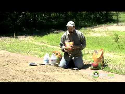 Organic Gardening – Soil Amendments